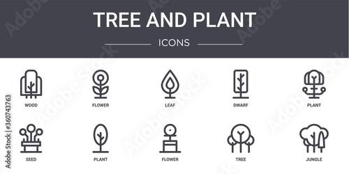 Fototapeta tree and plant concept line icons set. contains icons usable for web, logo, ui/ux such as flower, dwarf, seed, flower, tree, jungle, plant, leaf obraz na płótnie