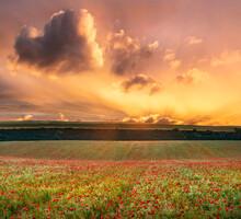 Epic Landscape Image Of Poppy ...
