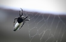 Selective Focus Shot Of A Spid...