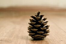 Selective Focus Shot Of A Pine...
