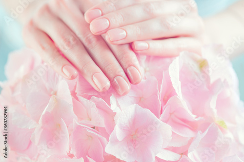 Obraz Beautiful Healthy nails. Manicure, Beautiful Woman's hands, Spa. Female hands with beautiful natural pink french elegant manicure on pink hydrangea flower. Soft skin, skincare. Salon, treatment. - fototapety do salonu