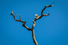 Tree Branches On Blue Sky Back...