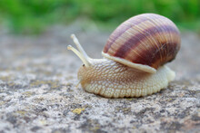Snail Animal Life In Nature On...