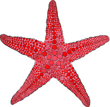 Red Starfish Vector