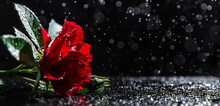 Romantic Background With Red R...