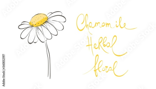Stampa su Tela Decorative daisies