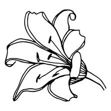 Vector Single Element. Floral ...