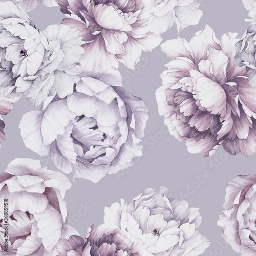 liliowe-kwiaty-piwoni