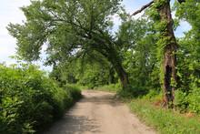 A Beautiful Tree Lined Dirt Pa...
