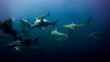 canvas print picture - Diver surrounded by a large group of black-tipped sharks. Aliwal Shoal. South Africa.