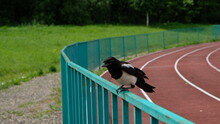Crow On The Road
