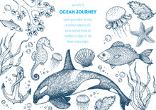 Sea Animals Hand Drawn Collect...