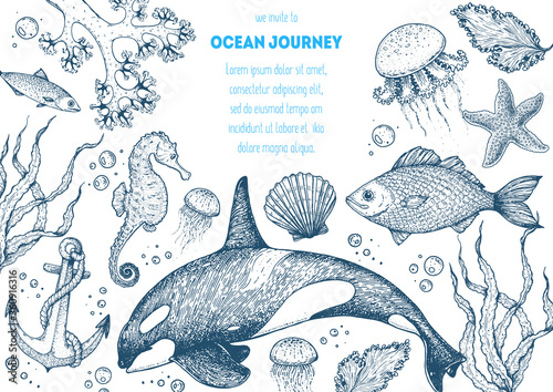 Sea animals hand drawn collection. Sketch illustration. Killer whale, sea horse, jellyfish, fish, seaweed, seashells illustration. Vintage design template. Undersea world.