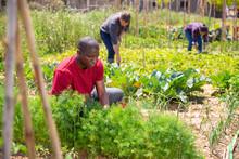 African American Man  Gardener...