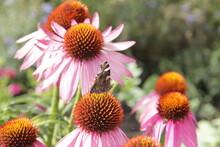 A Beautiful Mottled Butterfly ...