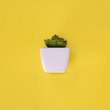 Botanical Copy Of Succulents I...