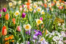 Beautiful Close-up Of Spring G...