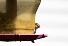 Bird Eating Out Of A Bird Feeder