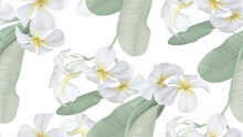 Floral Seamless Pattern, White Plumeria Flowers With Leaves On White