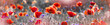 maki na tle abstrakcji | poppies on the abstraction background