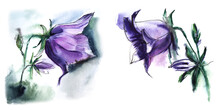 Watercolor Set Of Bluebell Ima...