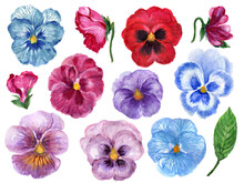 Hand Painted Floral Pansy Bota...