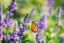 Butterfly (painted Jezebel) On...