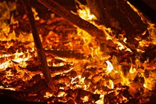 Burning Forest Close-up. Ragin...