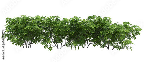 Canvas Print 3d Render Brush Tree Isolated  on white