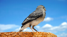 Sitting Bird Close-up Against The Background Of Summer Sky
