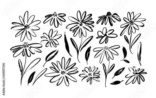 Stampa su Tela Chamomile hand drawn black paint vector set