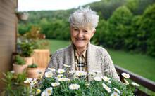 Senior Woman Gardening On Balc...