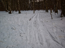 Skiing Among The Trees In The ...