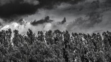 Mesmerizing Grey Scale Shot Of The Angry Clouds Through The Trees