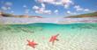 Unterwasserwelt Sardinien