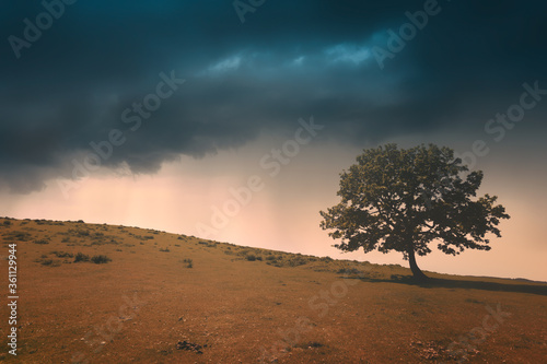Fotografie, Obraz lonely tree against a dramatic sunset sky