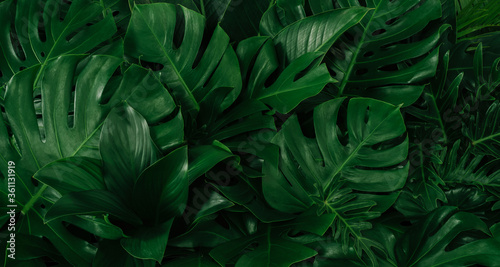 Obraz Creative tropical green leaves layout. Nature spring concept. Flat lay. - fototapety do salonu