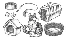 Set Of Isolated Sketch Of Cat ...