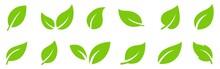 Leafs Green Set. Green Leaf Ec...