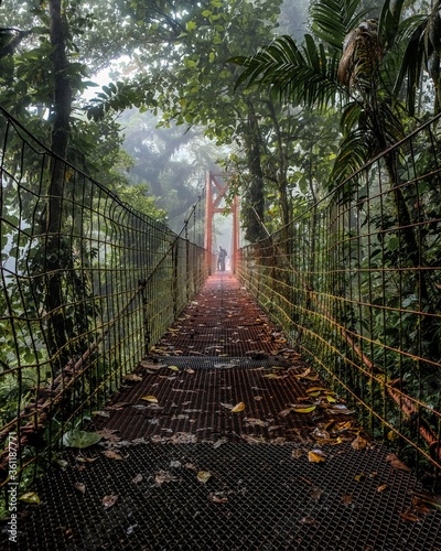 Beautiful shot of an old bridge in the middle of the forest - 361187771