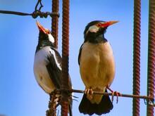 Birds, Summer, Beak, Feather, ...