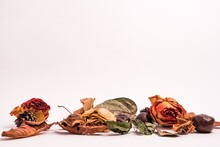 Different Dried Plants Isolated On A Light-colored Background