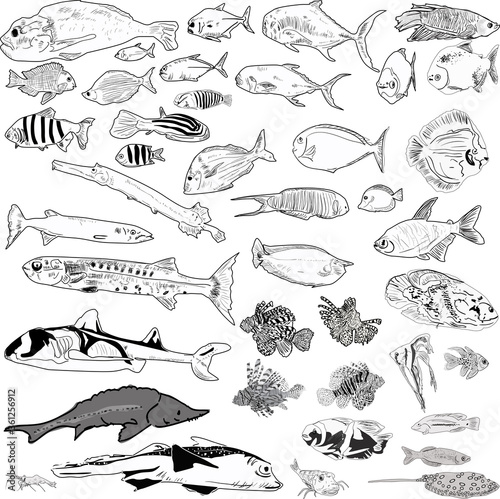 fourty grey outlines of fishes Wallpaper Mural