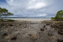 Eye-level Shot Of Rocks And Trees At The Beach In Tin Can Bay, Queensland, Australia