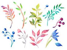Watercolor Illustration. Botan...
