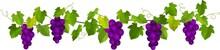 熟した紫色のぶどうの...