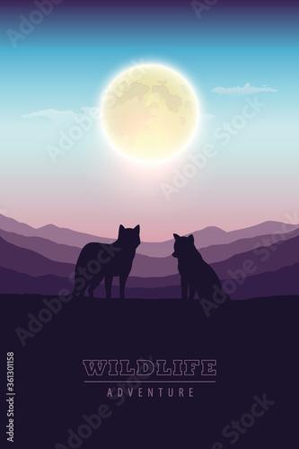 Fototapeta wildlife adventure wolf pack in the wilderness at full moon vector illustration EPS10 obraz
