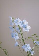 Blue Flower Blossom On White B...