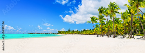 Obraz Coconut Palm trees on white sandy beach in Punta Cana, Dominican Republic - fototapety do salonu
