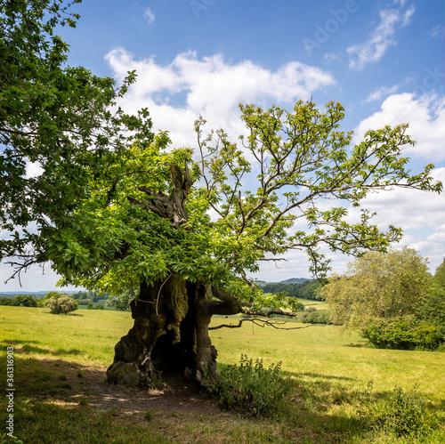 Fényképezés Image of tree looking human - Ent like